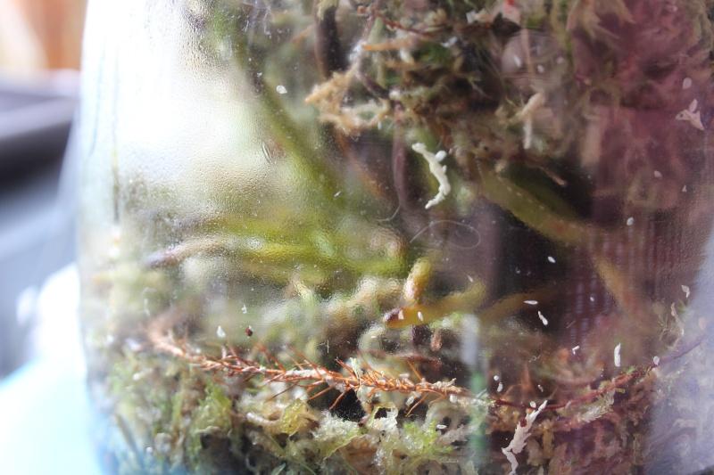 Mes orchidées + opération sauvetage d'une Vanda  Img_3717