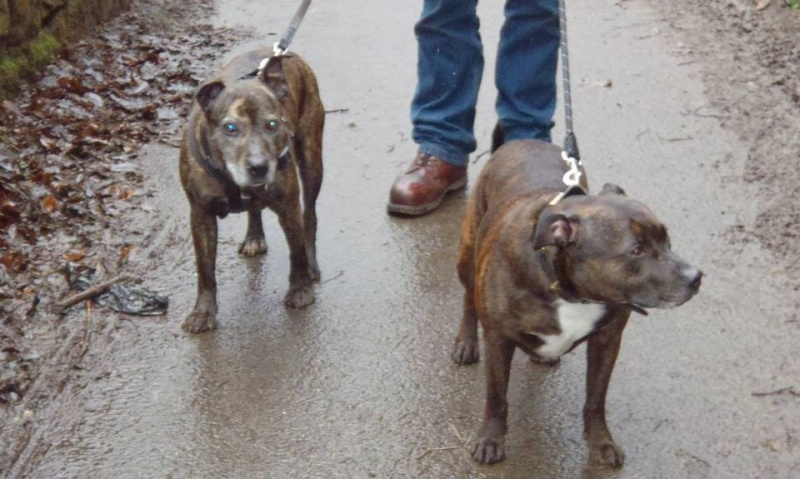 Ellie 7 y fostered Cumbria needs Forever home Ellie_13