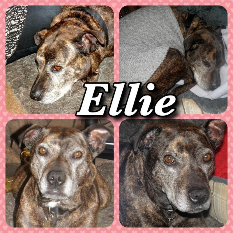 Ellie 7 y fostered Cumbria needs Forever home Ellie_20