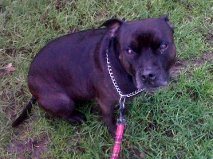 Jake  7 y needs a new home East Sussex area (loves cats) Jake_f12