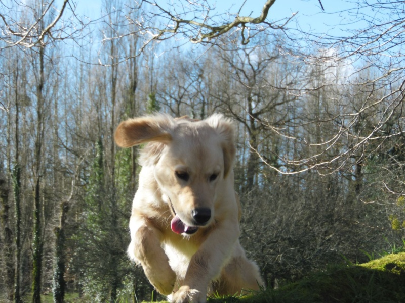 Les aventures d'Icare, Golden retriever  - Page 3 2014-048