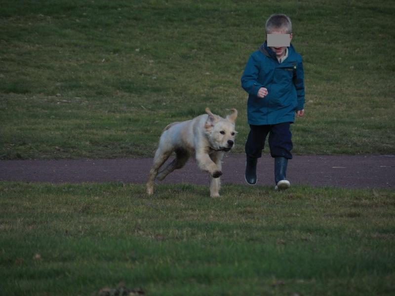 Des enfants et des chiens... - Page 2 2014-093