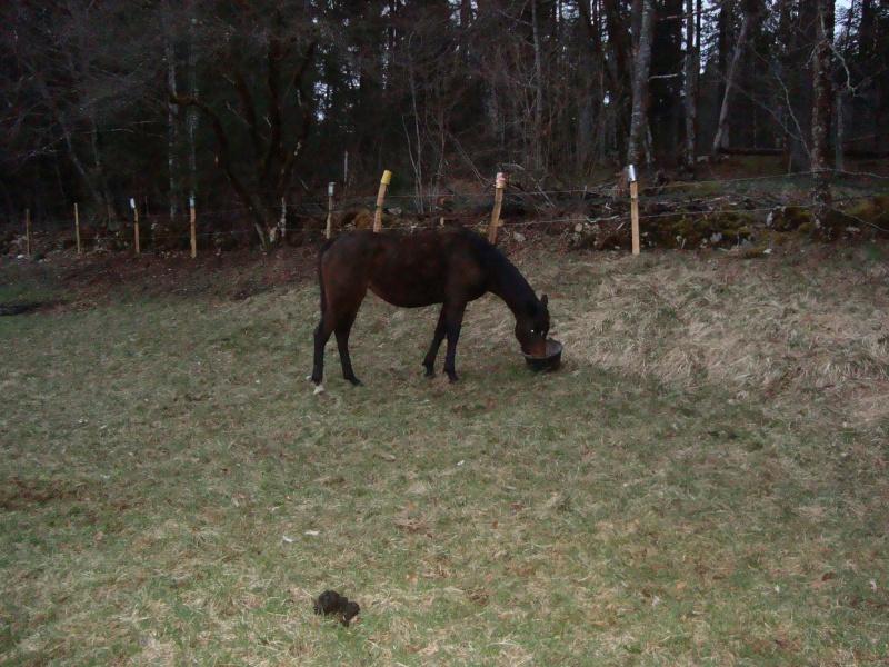 HAVANE - OI poney  née en 1995 - adoptée en mars 2014 par dona carlota Dsc01712
