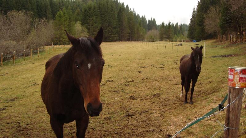HAVANE - OI poney  née en 1995 - adoptée en mars 2014 par dona carlota Dsc01714