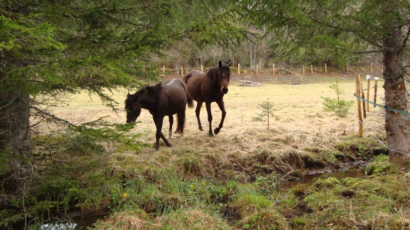 HAVANE - OI poney  née en 1995 - adoptée en mars 2014 par dona carlota Dsc01715