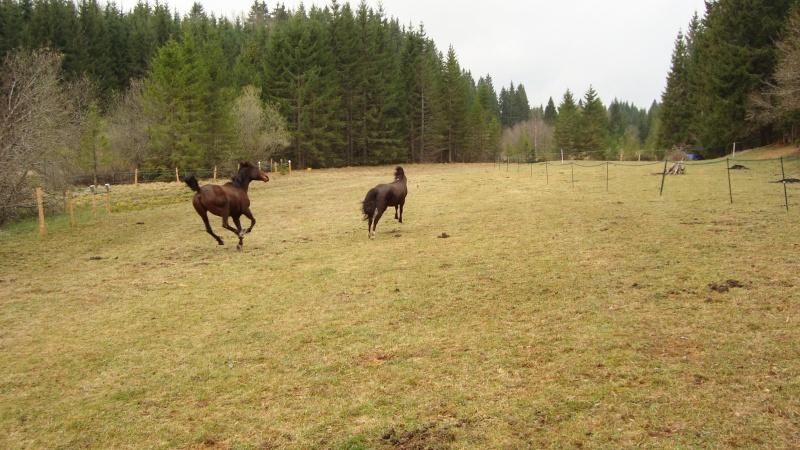 HAVANE - OI poney  née en 1995 - adoptée en mars 2014 par dona carlota Dsc01716