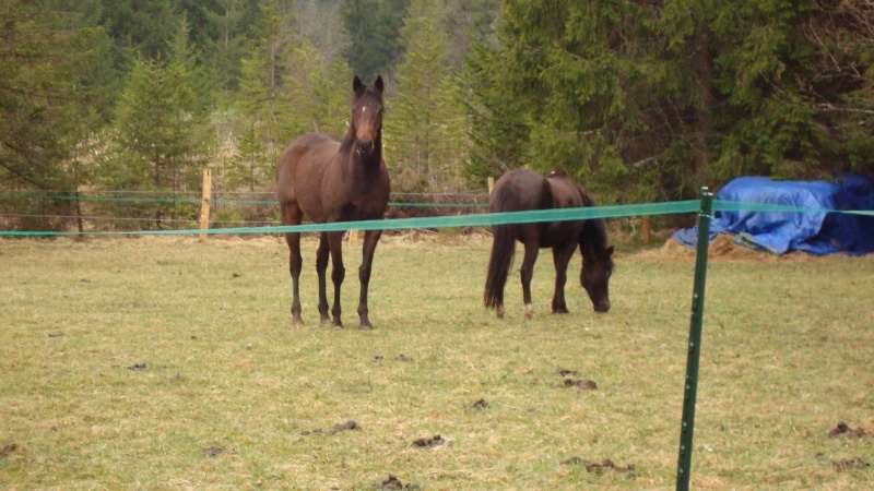 HAVANE - OI poney  née en 1995 - adoptée en mars 2014 par dona carlota Dsc01717