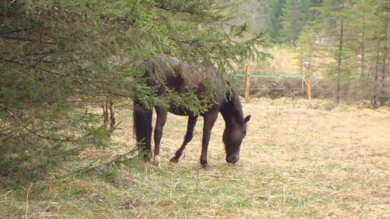 HAVANE - OI poney  née en 1995 - adoptée en mars 2014 par dona carlota Dsc01719
