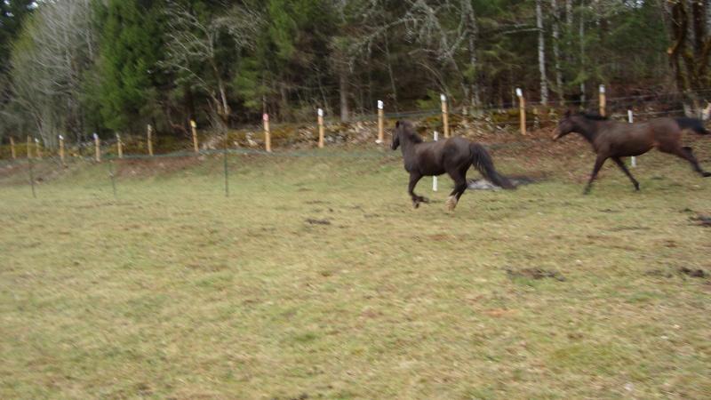 HAVANE - OI poney  née en 1995 - adoptée en mars 2014 par dona carlota Dsc01720