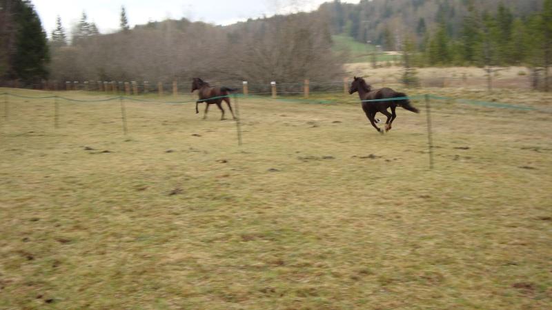 HAVANE - OI poney  née en 1995 - adoptée en mars 2014 par dona carlota Dsc01721
