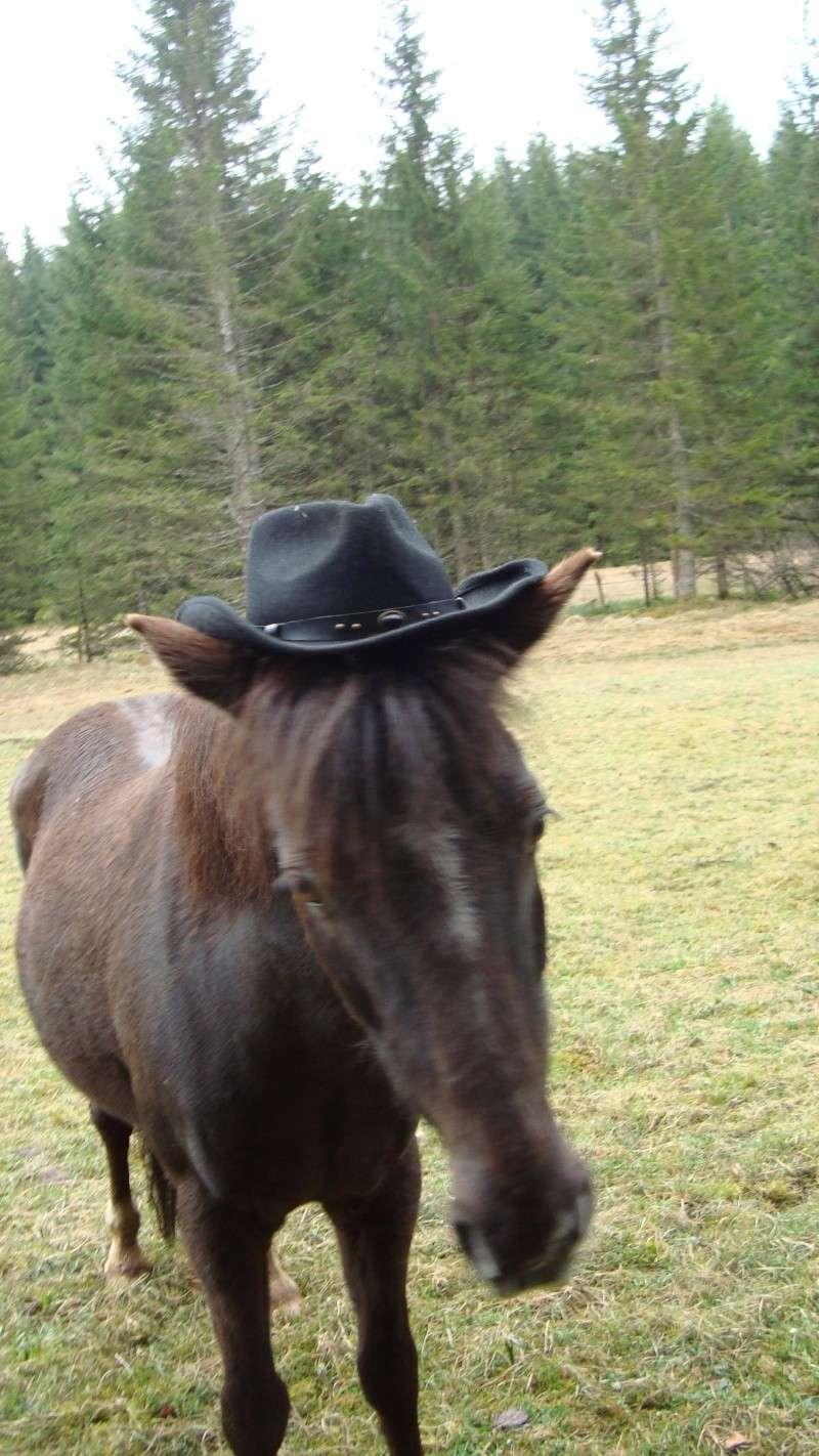 HAVANE - OI poney  née en 1995 - adoptée en mars 2014 par dona carlota Dsc01722
