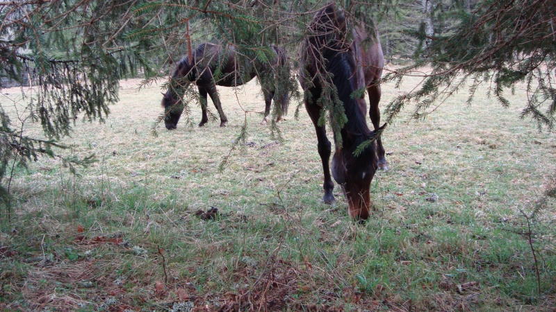 HAVANE - OI poney  née en 1995 - adoptée en mars 2014 par dona carlota Dsc01723