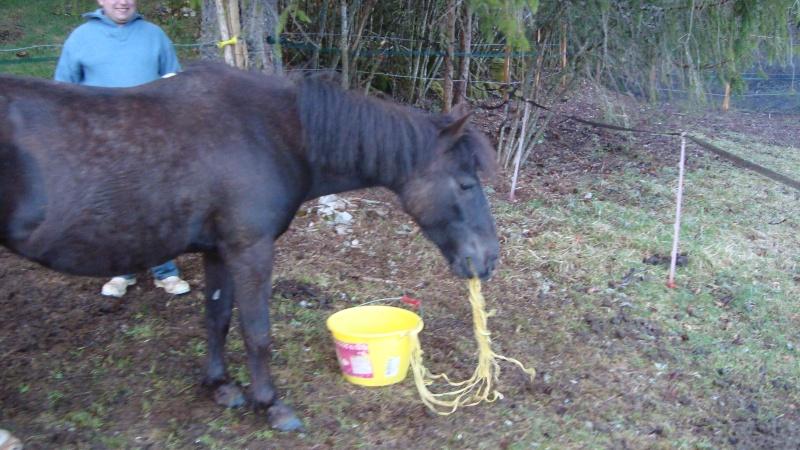 HAVANE - OI poney  née en 1995 - adoptée en mars 2014 par dona carlota Dsc01724