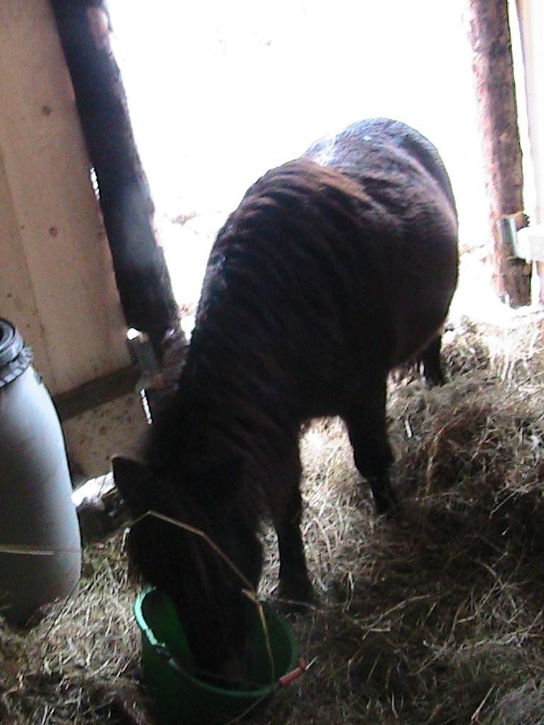 REGLISSE - ONC poney typée Shetland née en 2000 - adoptée en novembre 2013 par Solenn - Page 3 Img_0114