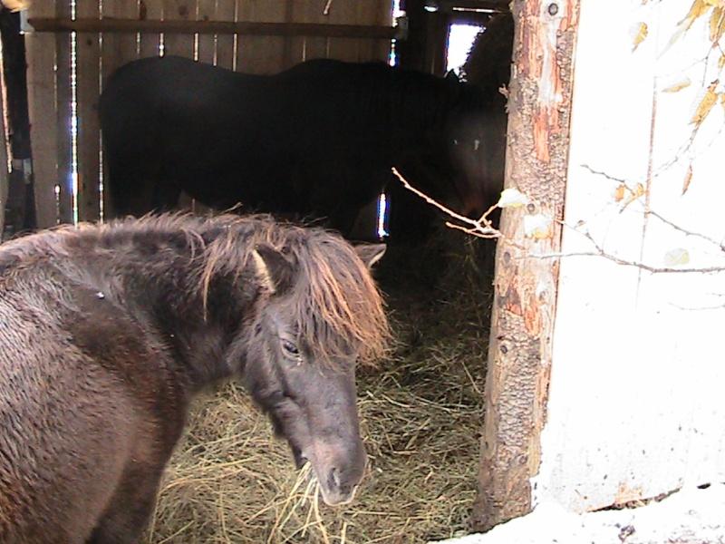 REGLISSE - ONC poney typée Shetland née en 2000 - adoptée en novembre 2013 par Solenn - Page 3 Img_0115