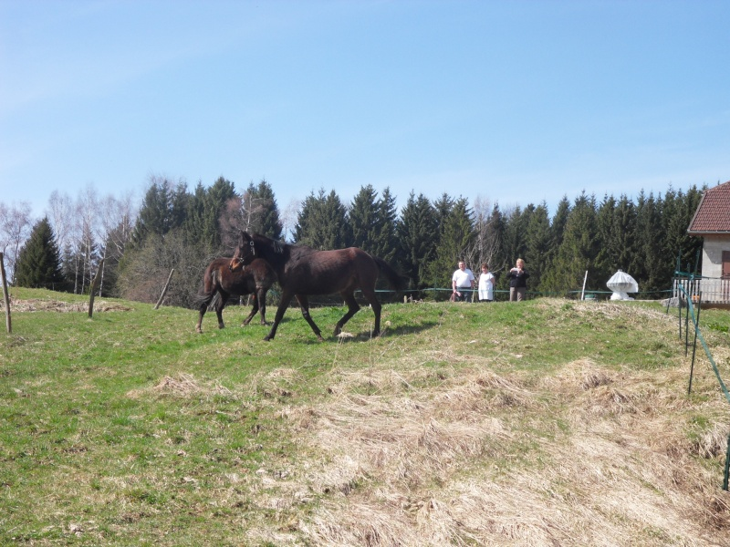 HAVANE - OI poney  née en 1995 - adoptée en mars 2014 par dona carlota Sdc17410