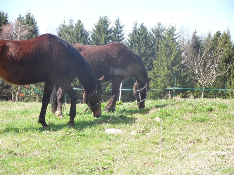 HAVANE - OI poney  née en 1995 - adoptée en mars 2014 par dona carlota Sdc17411