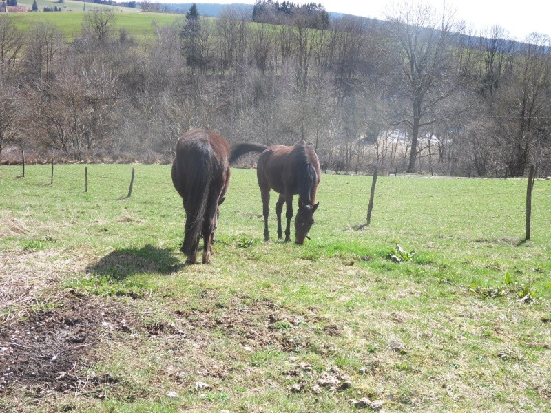 HAVANE - OI poney  née en 1995 - adoptée en mars 2014 par dona carlota Sdc17412