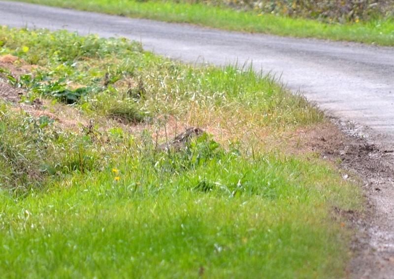 Rallye Au Pas Du Lièvre Dsc_0212