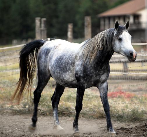 photo montage avec un cheval Web_be11