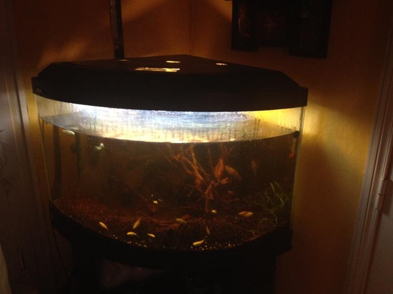 replanter dans aquarium peuplé  Bac_aq12