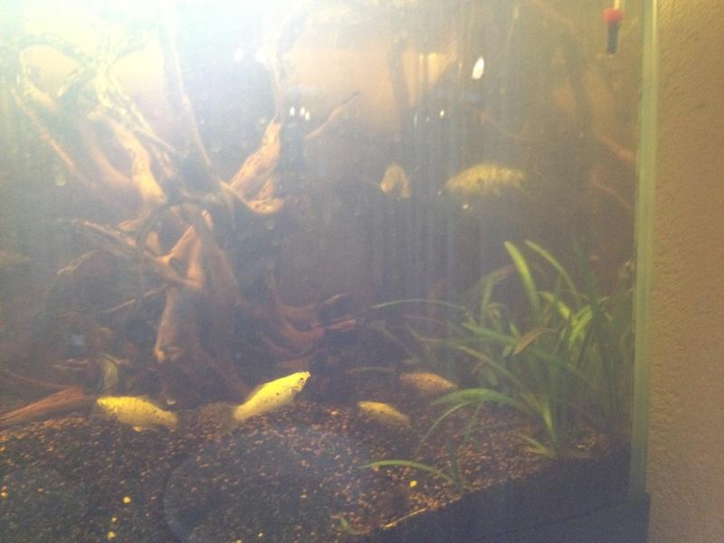 replanter dans aquarium peuplé  Vue_en10