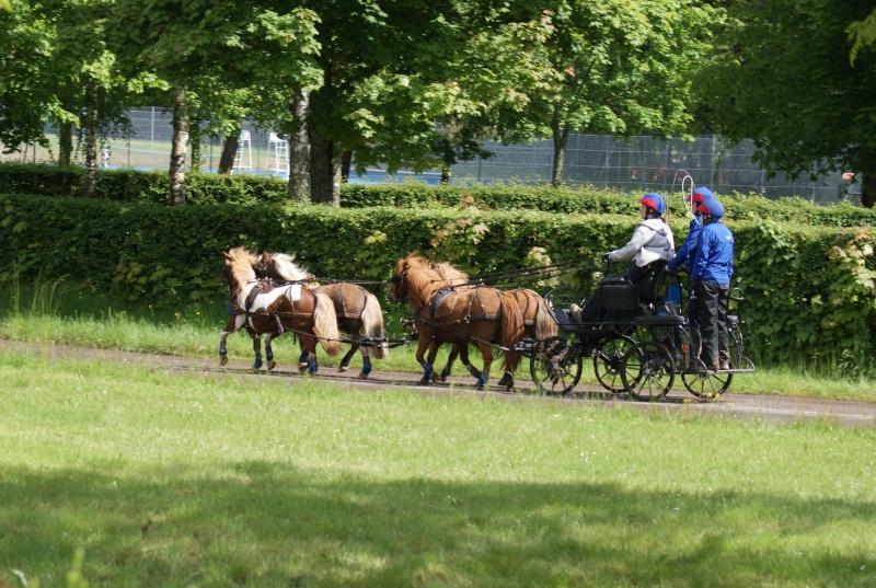 Gaelle et ses poneys... Teamhe10