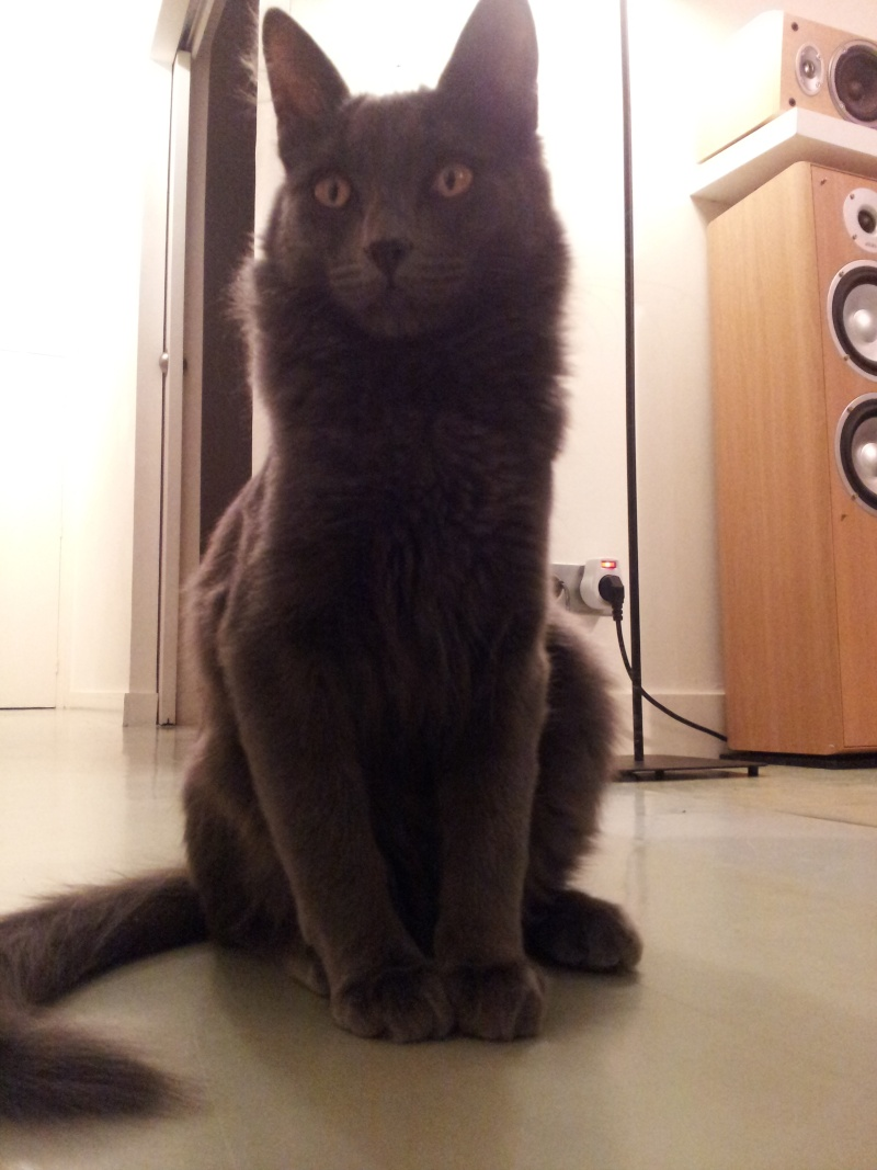 HELIO (Whiskas) et NEL (Giddy) - Page 2 20140411