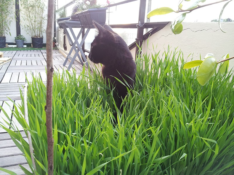 HELIO (Whiskas) et NEL (Giddy) - Page 2 20140512