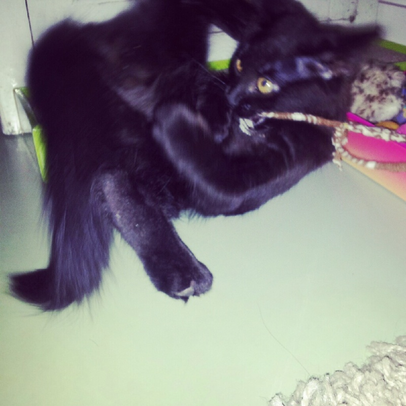 HELIO (Whiskas) et NEL (Giddy) - Page 2 Img_2012