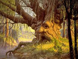 """Ile de la """" Forêt """""""