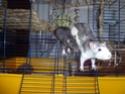 Ma joyeuse bande de petits hobbits joufflus (et poilus !) P1070410