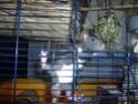 Ma joyeuse bande de petits hobbits joufflus (et poilus !) P1070413