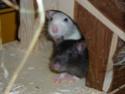 Ma joyeuse bande de petits hobbits joufflus (et poilus !) P1070510