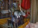 Ma joyeuse bande de petits hobbits joufflus (et poilus !) P1070513