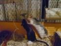 Ma joyeuse bande de petits hobbits joufflus (et poilus !) P1070610