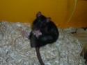 Ma joyeuse bande de petits hobbits joufflus (et poilus !) P1070612