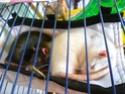 Ma joyeuse bande de petits hobbits joufflus (et poilus !) P1070810