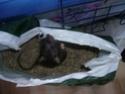 Ma joyeuse bande de petits hobbits joufflus (et poilus !) P1070813
