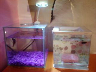 Mes deux aquarium Photo-14