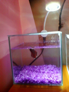 Mes deux aquarium Photo-15