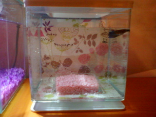 Mes deux aquarium Photo-16