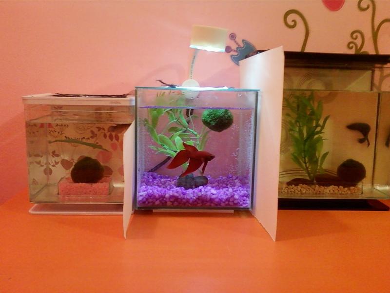 Mes 3 aquarium Photo-21