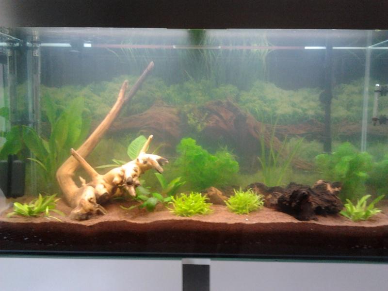 Mon premier aquarium 2013-110