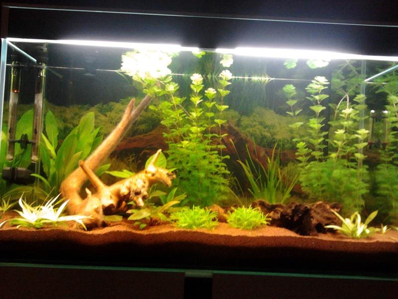 Mon premier aquarium 2014-010