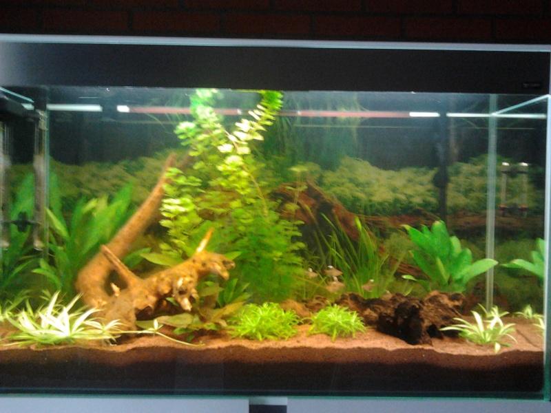 Mon premier aquarium 2014-011
