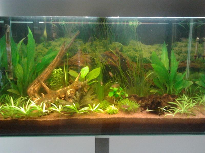 Mon premier aquarium - Page 2 2014-015