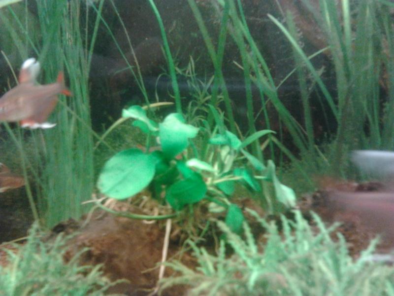 Mon premier aquarium - Page 2 2014-016