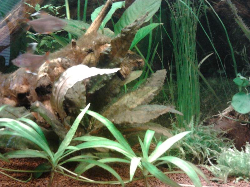 Mon premier aquarium - Page 2 2014-019