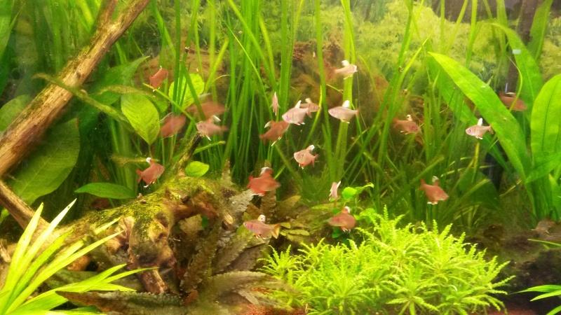 Mon premier aquarium - Page 2 20140410
